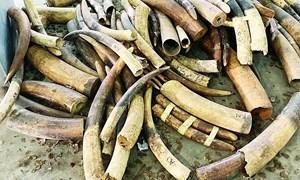 Tạm dừng nhập khẩu đối với động vật hoang dã