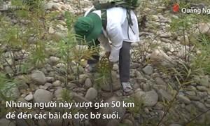 [Video] Sưu tầm đá lạ dọc bờ suối ở Quảng Ngãi
