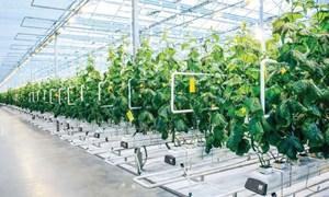 Huy động nguồn lực tài chính cho phát triển nông nghiệp: Kinh nghiệm quốc tế và bài học với Việt Nam