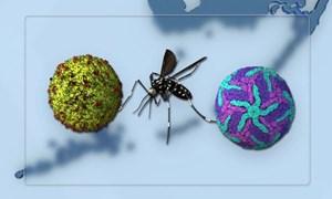 [Video] Mỹ thả muỗi biến đổi gene để kiểm soát muỗi gây bệnh