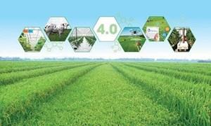 Hoàn thiện chính sách về vốn cho chuyển đổi nông nghiệp số, phát triển ngành nông nghiệp bền vững