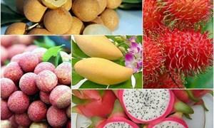 [Infographics] Hành trình xuất ngoại của trái cây đặc sản Việt Nam