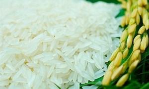 Giá lúa nếp tươi giảm nhẹ, giá gạo biến động trái chiều