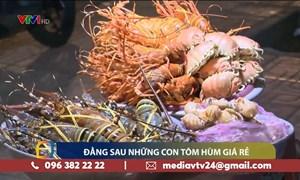 [Video] Sự thật về tôm hùm giá rẻ chỉ 150.000 đồng/con