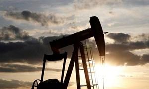 Số liệu thị trường xăng, dầu tháng 8/2019