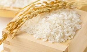 Đầu tuần giá lúa gạo đi ngang