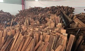 60 container gỗ Giáng hương