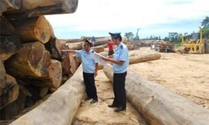 Có được hoàn thuế GTGT mặt hàng gỗ xuất khẩu sang nước thứ ba?