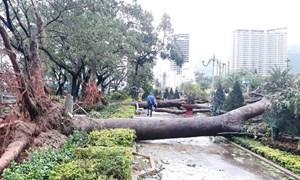[Video] Ngổn ngang sau bão số 5