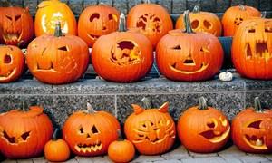 [Video] Anh có thể vứt bỏ 8 triệu quả bí ngô sau Halloween