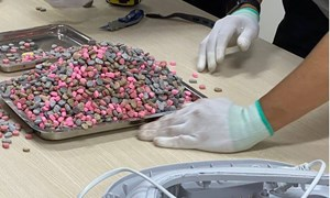 Hơn 20kg ma túy bị lực lượng Hải quan TP. Hồ Chí Minh bắt giữ