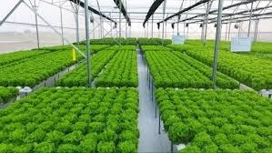 Đa dạng hóa phương thức kinh doanh nông sản