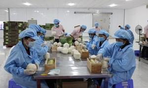 Xuất khẩu rau quả Việt Nam hướng đến mục tiêu 10 tỷ USD vào năm 2030