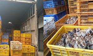 Hải quan Quảng Ninh bắt giữ 15.000 con gà con nhập lậu