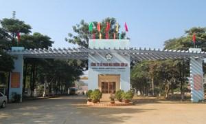 Tái cơ cấu doanh nghiệp: Nhìn từ Công ty cổ phần Mía đường Sơn La