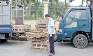 Hải quan Quảng Ninh: Bắt giữ gia cầm giống, sò chết nhập lậu