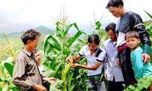 Nâng cao vai trò khuyến nông từ cơ sở: Nhìn từ Trạm Tấu - Yên Bái