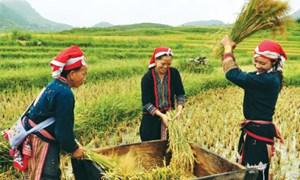 Lào Cai đột phá trong phát triển nông nghiệp