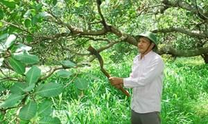 Bình Phước: Mở rộng phát triển kinh tế trang trại