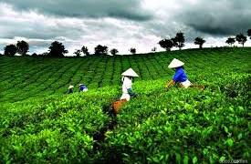 Tỉnh Thái Nguyên nằm trong Quy hoạch tổng thể vùng nông nghiệp ứng dụng công nghệ cao