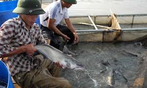 Lào Cai: Tập huấn nuôi cá lồng cho học viên
