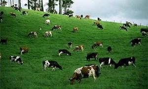 Để ngành Chăn nuôi Việt Nam tận dụng tốt cơ hội khi hội nhập