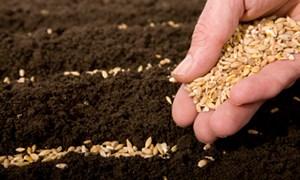 Chính phủ hỗ trợ hạt giống cho nhiều tỉnh thành