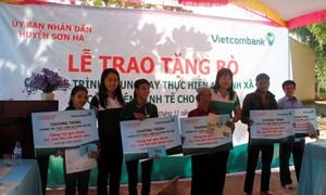 Vietcombank Quảng Ngãi tài trợ 100 con bò cho các hộ nghèo