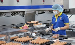 Vietcombank tiếp tục đồng hành để phát triển nguồn thực phẩm sạch