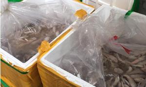 Một tháng bắt 5 vụ vận chuyển trái phép hàng vi phạm an toàn thực phẩm