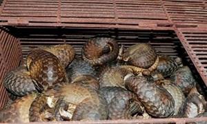 Bắt giữ, mua bán động vật hoang dã, quý hiếm: Vì lợi nhuận bất chấp pháp luật
