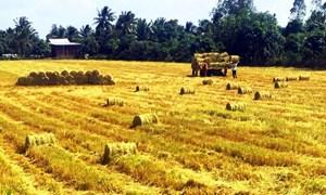 Đa dạng thị trường xuất khẩu gạo