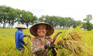 Bộ Tài chính đề xuất tiếp tục gia hạn thời gian miễn thuế sử dụng đất nông nghiệp đến hết năm 2025