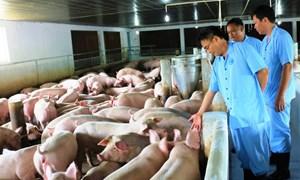 FAO cam kết hỗ trợ Việt Nam ứng phó dịch tả lợn châu Phi