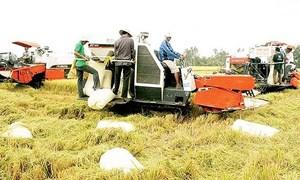 Sớm chính quy hóa sản xuất lúa gạo