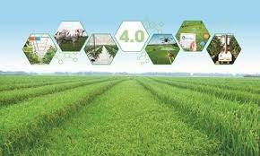 Thúc đẩy số hóa trong sản xuất nông nghiệp