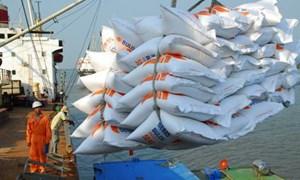 Tạm ứng trước hạn ngạch 100.000 tấn gạo xuất khẩu trong tháng 5