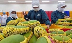 Tổng cục Hải quan: Xuất khẩu rau quả, cà phê, xơ sợi đã vượt 1 tỷ USD