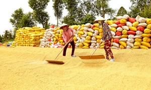 Xuất khẩu lúa gạo: Giữ an toàn và chớp đúng thời cơ
