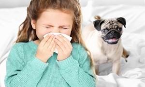 Hồng Kông: Khả năng nhiễm và lây truyền COVID-19 ở thú nuôi rất thấp