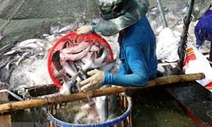 Ngành hàng cá tra có khả năng phục hồi hoàn toàn từ quý III