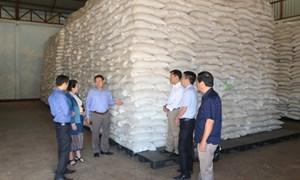 Tăng cường giám sát chặt việc đấu thầu gạo dự trữ quốc gia đợt 2
