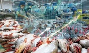 Cổ phiếu cá tra nổi sóng trước thông tin miễn thuế