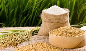 Việt Nam có cơ hội lớn để vượt qua Thái Lan về xuất khẩu gạo toàn cầu