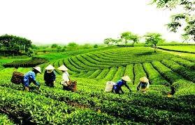 Hơn 1.160 tỷ đồng xây dựng nông thôn mới tại Thái Nguyên