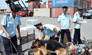 Hải quan: Thu nộp NSNN hơn 256 tỷ đồng từ hoạt động chống buôn lậu