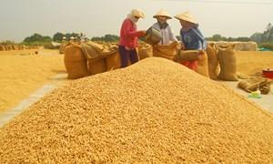 Kiên Giang thúc đẩy liên kết, phát triển chuỗi giá trị lúa gạo