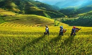 Quốc hội: Tập trung phát triển kinh tế - xã hội vùng đồng bào dân tộc thiểu số và miền núi