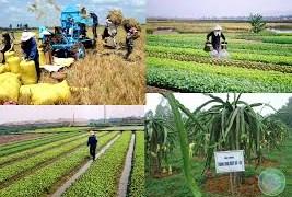 Kích cầu nội địa - chiến lược lâu dài của ngành nông nghiệp