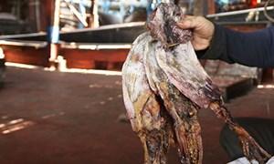 Nông thủy sản Việt điêu đứng vì không xuất được sang Trung Quốc